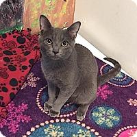 Adopt A Pet :: Jesse - Lakewood, CO