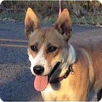 Shepherd (Unknown Type)/Basenji Mix Dog for adoption in Tyler, Texas - L-Macy