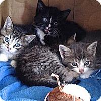 Adopt A Pet :: Jesse - Island Park, NY