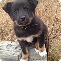 Adopt A Pet :: Marta - Saskatoon, SK