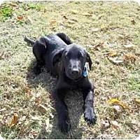 Adopt A Pet :: Ziggy - Adamsville, TN
