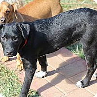 Adopt A Pet :: Dani - Wakefield, RI