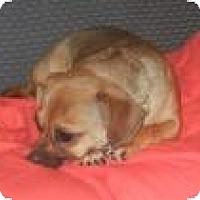 Adopt A Pet :: Queenie  ADOPTED!! - Antioch, IL
