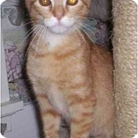 Adopt A Pet :: Sequoia - St. Louis, MO