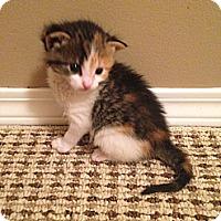 Adopt A Pet :: Sienna - Edmonton, AB