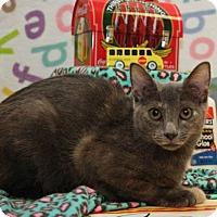 Adopt A Pet :: Crowley - Bedford, TX