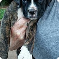 Adopt A Pet :: Bistre - Peachtree City, GA