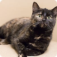 Adopt A Pet :: Raisinette - Chicago, IL