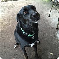 Adopt A Pet :: Stella (courtesy gemma) - Homestead, FL