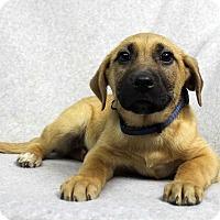 Adopt A Pet :: Danny - Westminster, CO