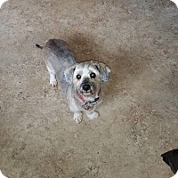 Adopt A Pet :: Sophia mae - Tomah, WI