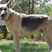 Adopt A Pet :: Diesel - Citrus Springs, FL