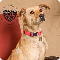 Adopt A Pet :: Sunny - Inglewood, CA