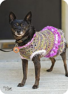 Chihuahua/Terrier (Unknown Type, Small) Mix Dog for adoption in Baton Rouge, Louisiana - Ruthie