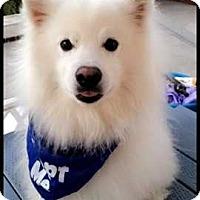 Adopt A Pet :: Glacier - Livermore, CA