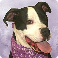 Adopt A Pet :: Kumar - Cincinnati, OH