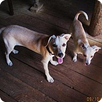 Adopt A Pet :: LILLIE - Rocky Hill, CT