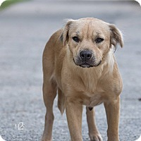Adopt A Pet :: Megan - Daleville, AL