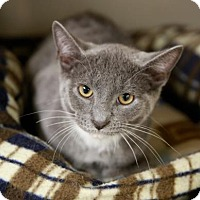 Adopt A Pet :: Fargo - Kettering, OH