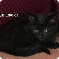 Adopt A Pet :: Mr. Blackie - Granbury, TX