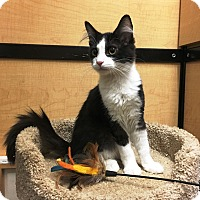 Adopt A Pet :: Cuddles - Riverside, CA