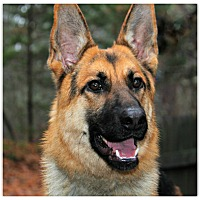 Adopt A Pet :: Henney - Forked River, NJ