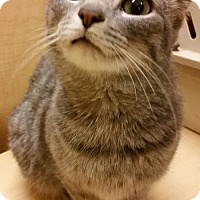 Adopt A Pet :: Quinn - Toledo, OH