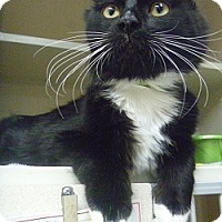 Adopt A Pet :: Chevy - Hamburg, NY