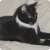 Adopt A Pet :: Zeda - Buhl, ID