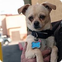 Adopt A Pet :: Melton - Palmdale, CA