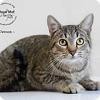 Adopt A Pet :: Dawson - Phoenix, AZ
