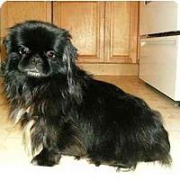 Adopt A Pet :: Jesper - Mooy, AL