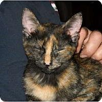 Adopt A Pet :: Blaze - Frederick, MD