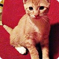 Adopt A Pet :: Natalya - Seminole, FL