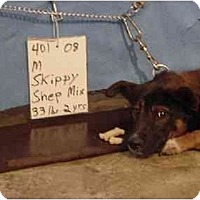 Adopt A Pet :: Skippy - RESCUED! - Zanesville, OH
