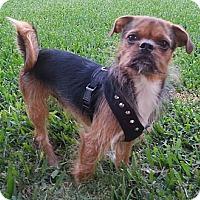 Adopt A Pet :: Gordy - Orlando, FL