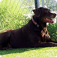 Adopt A Pet :: Kona - Meridian, ID