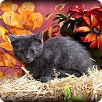 Adopt A Pet :: Hope - Union, KY