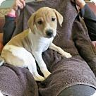 Adopt A Pet :: Kerry