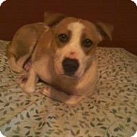 Adopt A Pet :: Rose Bud - Homer, NY
