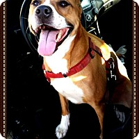 Adopt A Pet :: Niko - Camden, DE