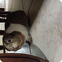 Adopt A Pet :: Chrissy - Fullerton, CA