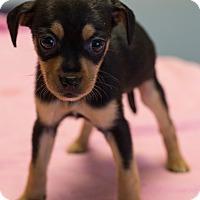 Adopt A Pet :: Fettuccine - $250 - Seneca, SC