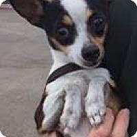 Adopt A Pet :: gypsy - Costa Mesa, CA