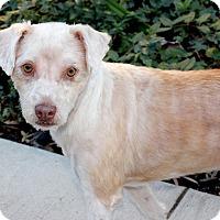 Adopt A Pet :: Ruff - Marina del Rey, CA