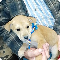 Adopt A Pet :: Hilde (HAS BEEN ADOPTED) - Albany, NY