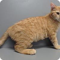 Adopt A Pet :: Reggie - Seguin, TX