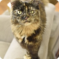 Adopt A Pet :: Amy - Homewood, AL