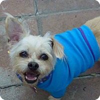 Adopt A Pet :: Blondie - VIEW MY VIDEO! - Los Angeles, CA