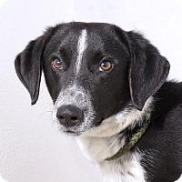 Adopt A Pet :: Jennings - Sudbury, MA
